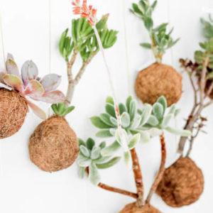 Plantes planètes - Fin de la vente le 22 avril