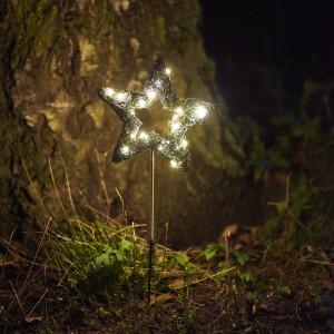 51712 - Garden Star - Sirius
