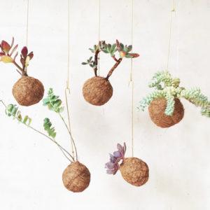 Planteplaneter - Fin de la vente le 29 avril